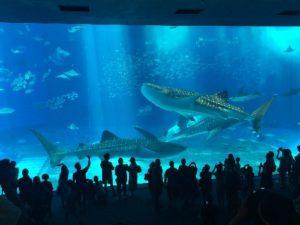 【沖縄旅行】VELTRA バスツアー 絶景の古宇利島・今帰仁・美ら海水族館・ワルミ大橋 体験感想