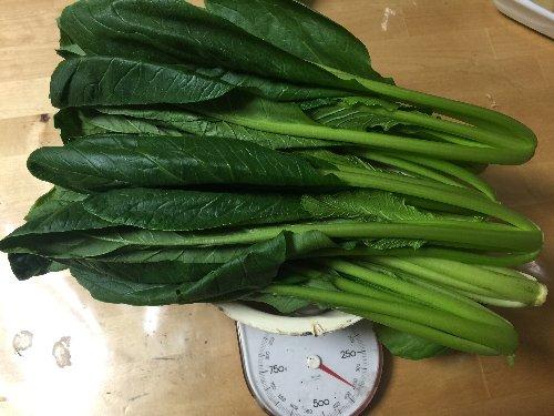 小松菜野菜350g