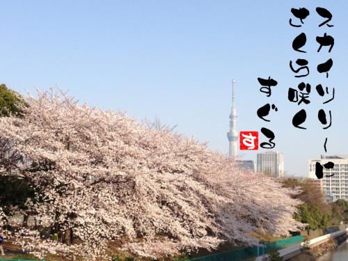 スカイツリーと桜