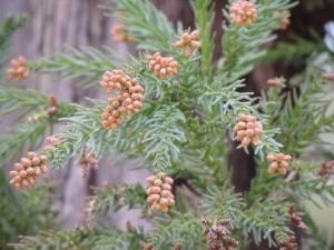 花粉の季節のお出かけをオシャレにするアイテム